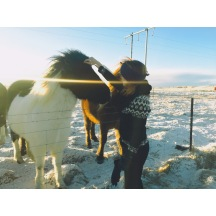 Literally about to cry because it's my last day in Iceland 🇮🇸😭 but earlier I was crying because I finally got to pet one of these magnificent ponies